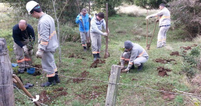 CERTAJA realiza o Projeto de reposição florestal